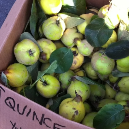 The quince fruit