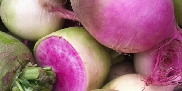 Radish on Foodtree